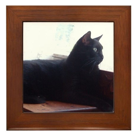 Black Cat In Window Framed Tile