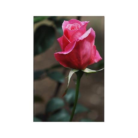 Pink Rosebud Rectangle Magnet