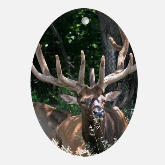 Elk Oval Ornament