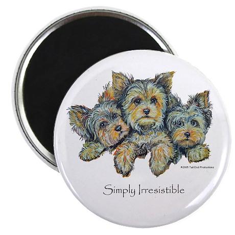 Yorkshire Terrier Puppies Magnet