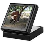 Texas Longhorn Keepsake Box