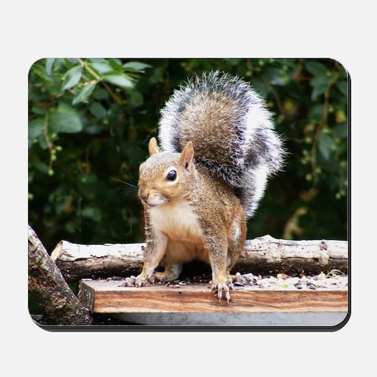 Gray Squirrel Mousepad