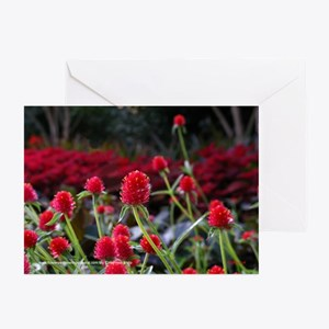 Gomphrena Greeting Cards (Pk of 20)