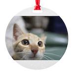 Kirara-chan Ornament