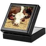 Hereford Steer Keepsake Box