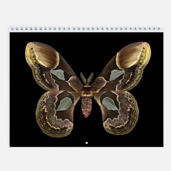Tropical Moth Collection Wall Calendar