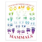 Tracks Of North American Mammals Small Poster