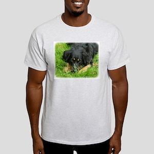Hovawart 9W009D-064. Light T-Shirt