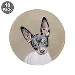 Rat Terrier 3.5