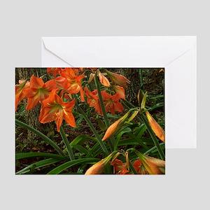 Garden of Amaryllis Greeting Card