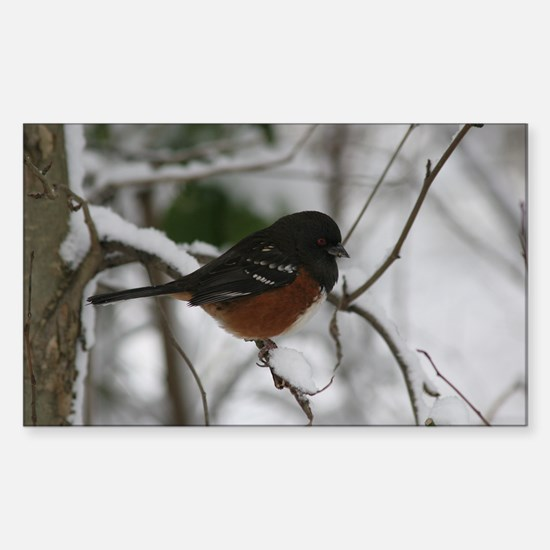 Spotted Towhee Rectangle Decal