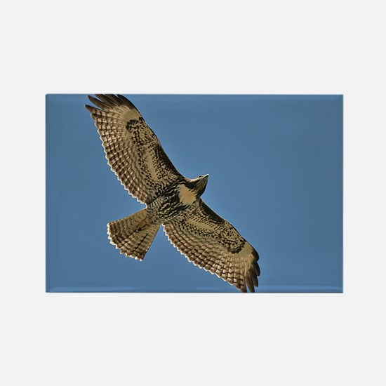 Red-Tailed Hawk Rectangle Magnet