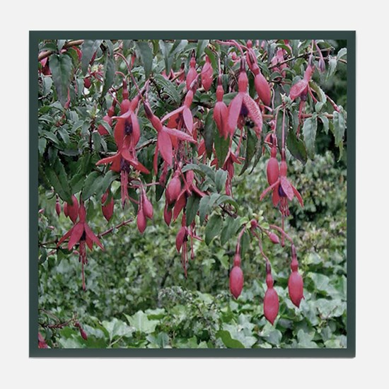 Fuschias Tile Coaster