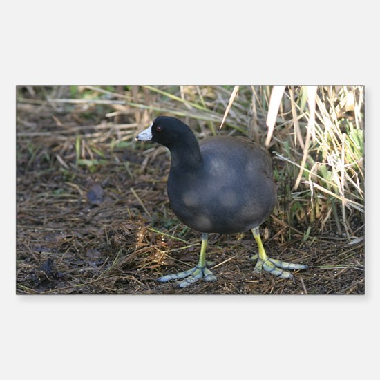 American Coot Rectangle Decal