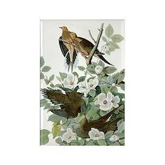 Audubon's Mourning Dove Rectangle Magnet