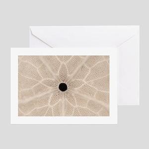 Sand Dollar Photo Greeting Cards (Pk of 10)