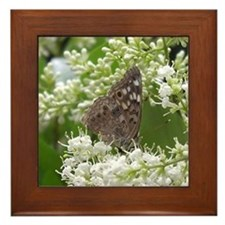 Hackberry Emperor Butterfly Framed Tile