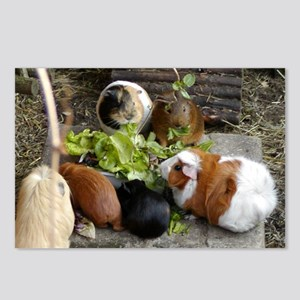 Guinea Pig Luncheon Postcards (Package of 8)