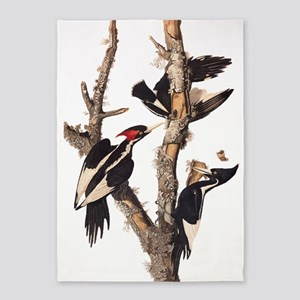 Ivory Billed Woodpecker Vintage Audubon 66 5'x7'Ar