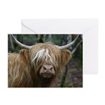 Highland Cow Blank Greeting Cards (Pk of 10)