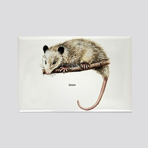 Opossum Possum Rectangle Magnet