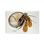 Hermit Crab Rectangle Magnet (10 pack)