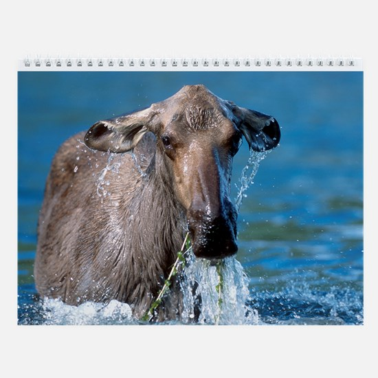 Canadian Wildlife Wall Calendar