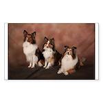Congratulations Sheltie Rectangle Sticker 50 Pk)