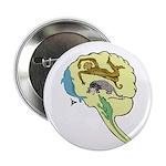 "Evolved Brain-b 2.25"" Button (100 pack)"