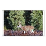 Buck in Afternoon Sunlight Rectangle Sticker 50 p