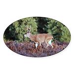 Buck in Afternoon Sunlight Oval Sticker