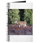 Buck in Afternoon Sunlight Journal
