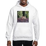 Buck in Afternoon Sunlight Hooded Sweatshirt