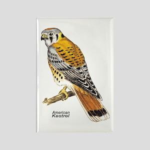 American Kestrel Bird Rectangle Magnet