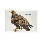 Golden Eagle Bird Rectangle Magnet (10 pack)