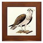 Osprey Bird of Prey Framed Tile