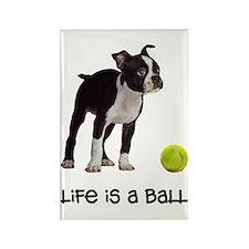 Boston Terrier Life Rectangle Magnet