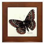 Baltimore Butterfly Framed Tile
