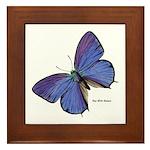 Blue Butterfly Framed Tile