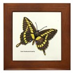 Giant Swallowtail Butterfly Framed Tile