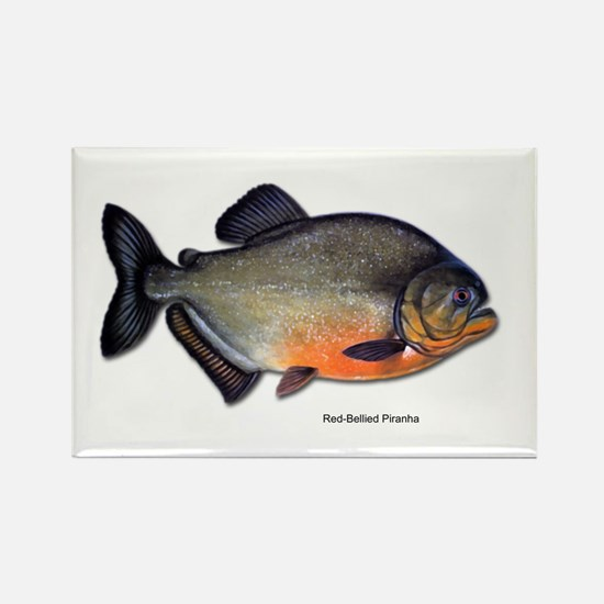 Red-Bellied Piranha Fish Rectangle Magnet