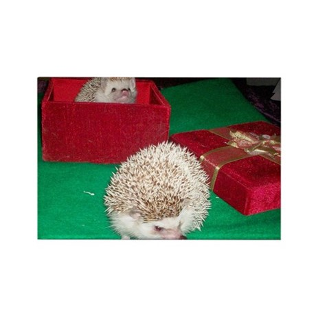 Holiday Hedgies Rectangle Magnet (100 pack)