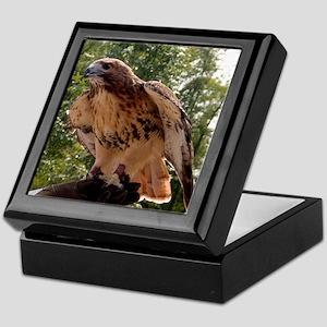 Red Tailed Hawk Ruffled Feath Keepsake Box