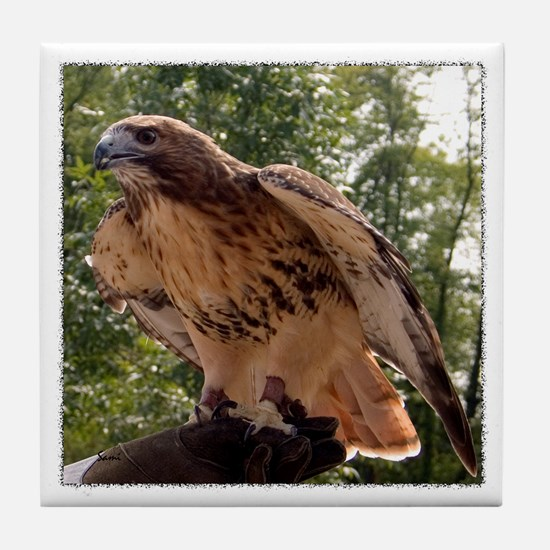 Red Tailed Hawk Ruffled Feath Tile Coaster