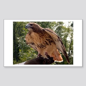 Red Tailed Hawk Ruffled Feath Sticker (Rectangular