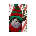 Holiday Elf Cat Rectangle Magnet