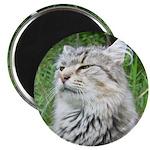 """Queen Cat 2.25"""" Magnet (10 pack)"""