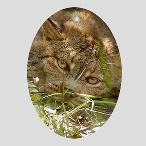 Canadian Lynx Oval Ornament