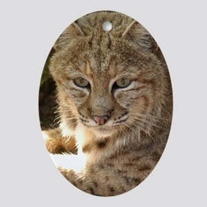 Bobcat Oval Ornament