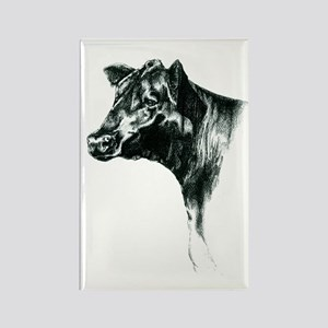 Angus Cow Rectangle Magnet
